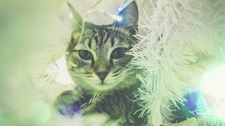 Растения для кошек, ядовитые, опасные, вредные, полезные комнатные растения   кошки - кто они?
