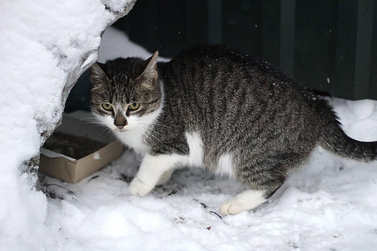 При какой температуре могут жить кошки на улице