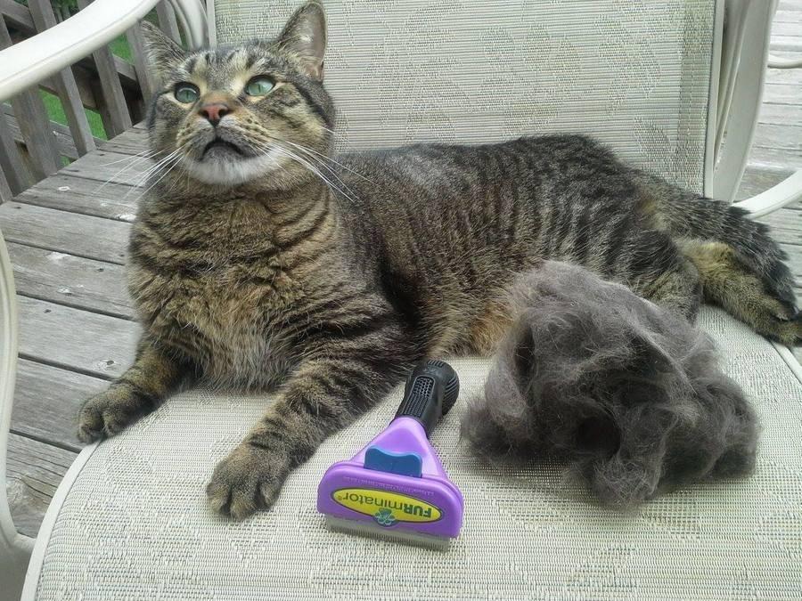 Фурминатор для кошек: как правильно выбрать