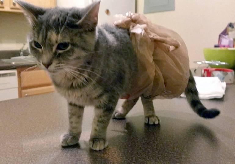 Понос у кошки и кота: причины, чем лечить в домашних условиях котенка и взрослое животное, что делать, если сопровождается рвотой или кровью