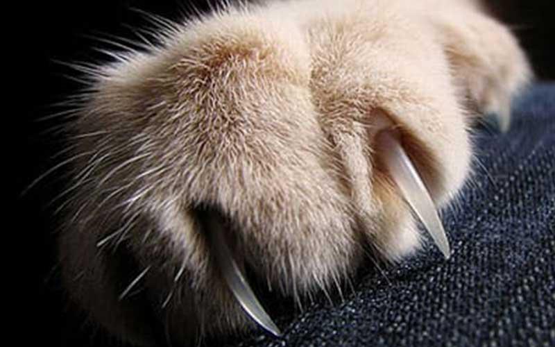 Антикоготь в действии! какую выбрать обивку для дивана, если в доме есть кошка