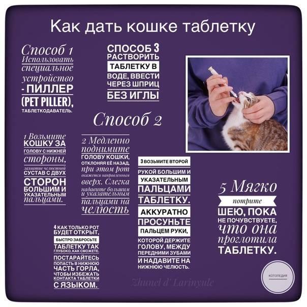 Как правильно кормить кошку из шприца