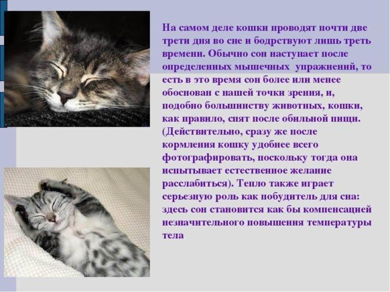 К чему снится большой кот или кошка женщине или мужчине, как сонники толкуют такой сон?