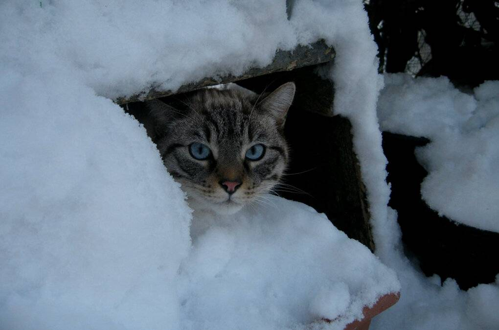 Мерзнут ли собаки зимой на улице