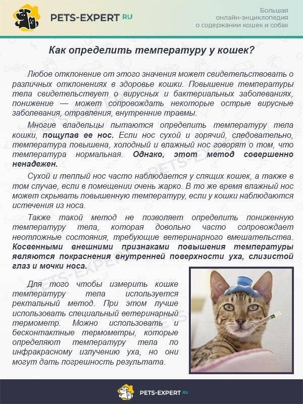 Нормальная температура у кошек: гипотермия и гипертермия