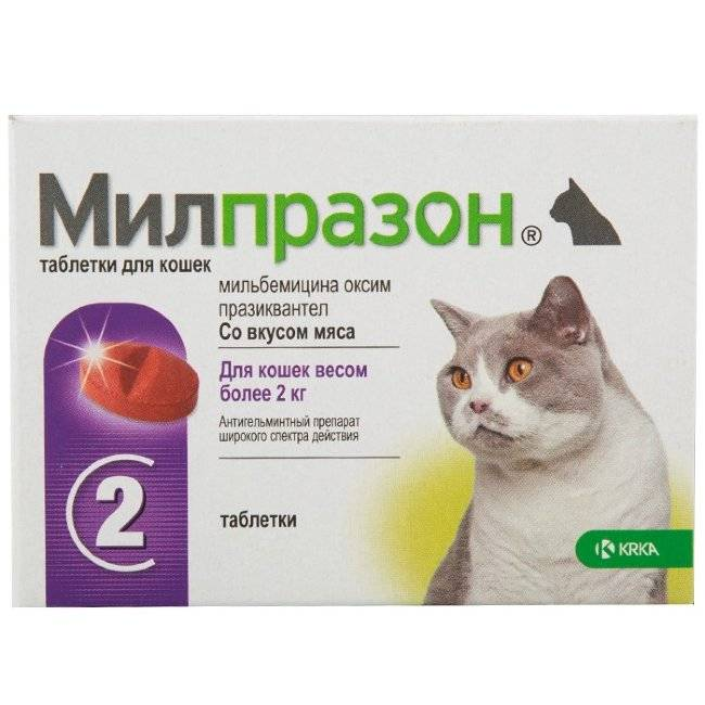 Средство от глистов для котят 3 месяца. таблетки от глистов для котенка