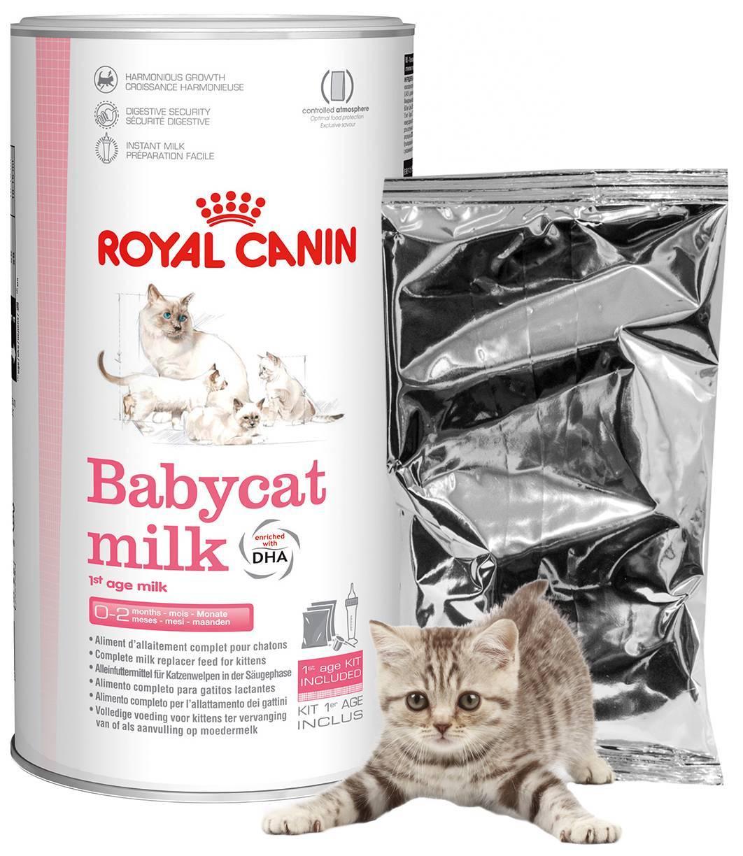 Чем и как кормить новорожденного котенка: как разводить детские смеси
