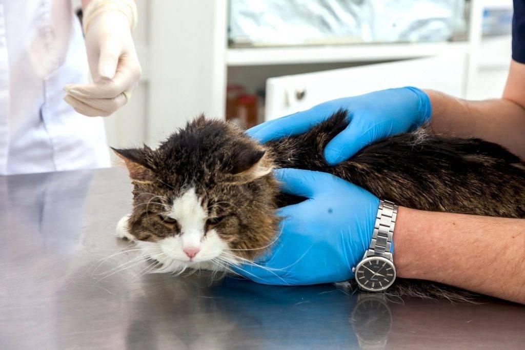 Самые распространенные болезни котят: симптомы и лечение