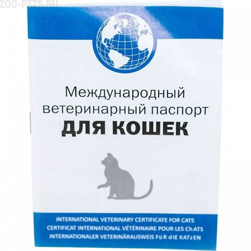 Как правильно сделать паспорт кошке, инструкция, советы, видео