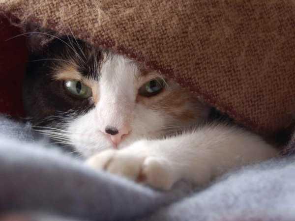 Ринит (насморк) у кошек и котов
