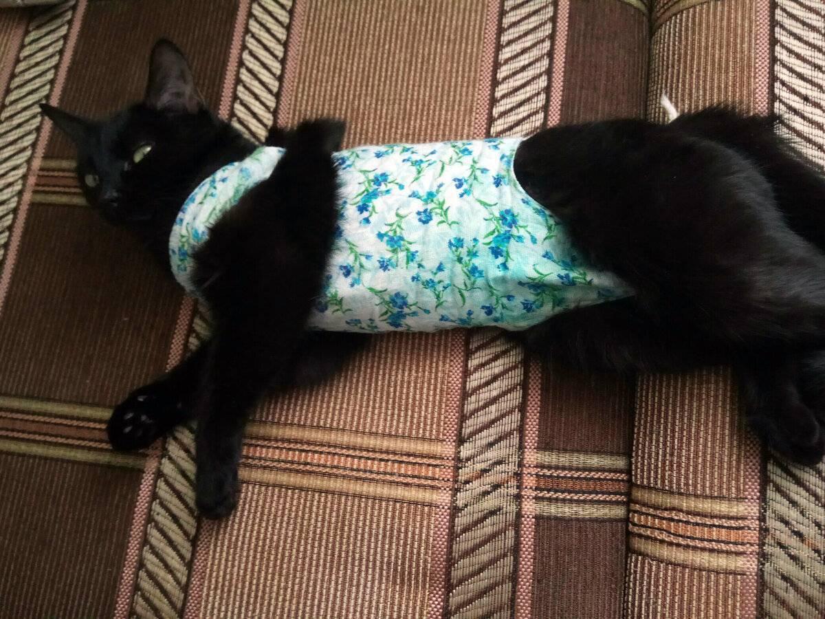 Что нужно знать владельцу кошки об анестезии?
