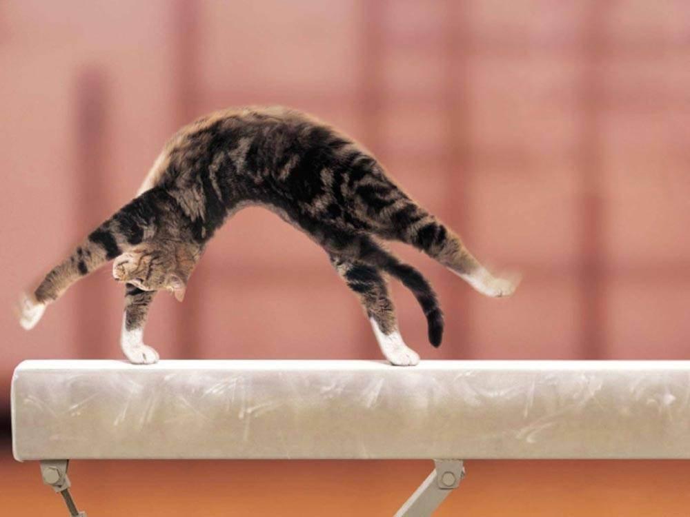 Как заставить похудеть кошку