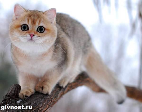 20 самых популярных пород кошек с описанием и фото