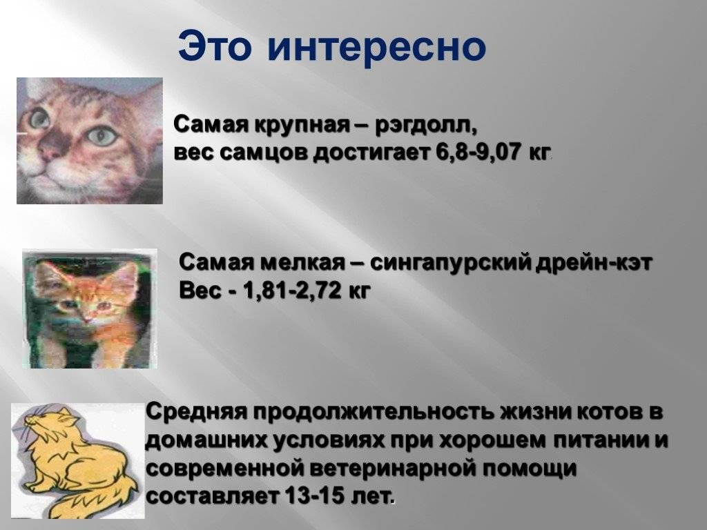 Сколько в среднем живут кошки?