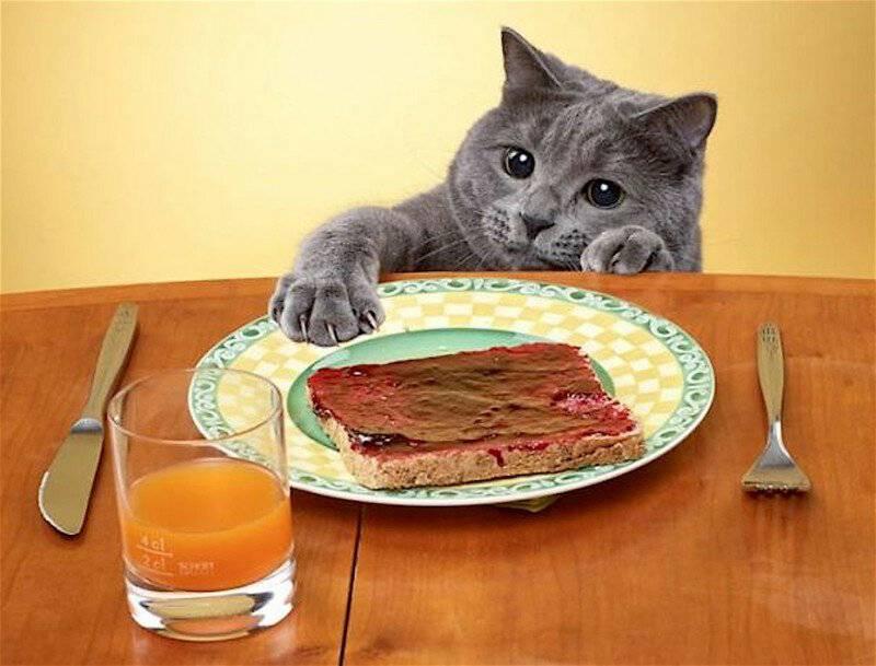 Почему кошка или кот постоянно просит есть: 11 причин, способы борьбы с попрошайничеством, патологические случаи