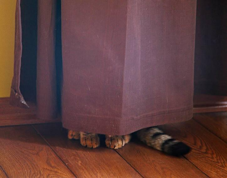 Что делать, если потерялась кошка: советы где искать, как написать объявление, и не попасть в руки мошенников