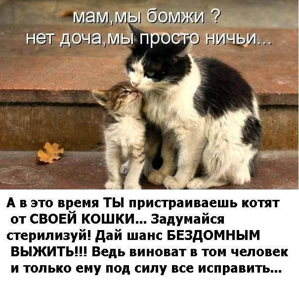 Котенок вялый, плохо ест и постоянно спит, что делать котенок вялый, плохо ест и постоянно спит, что делать
