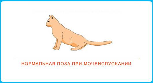 Признаки мочекаменной болезни у котов и способы лечения