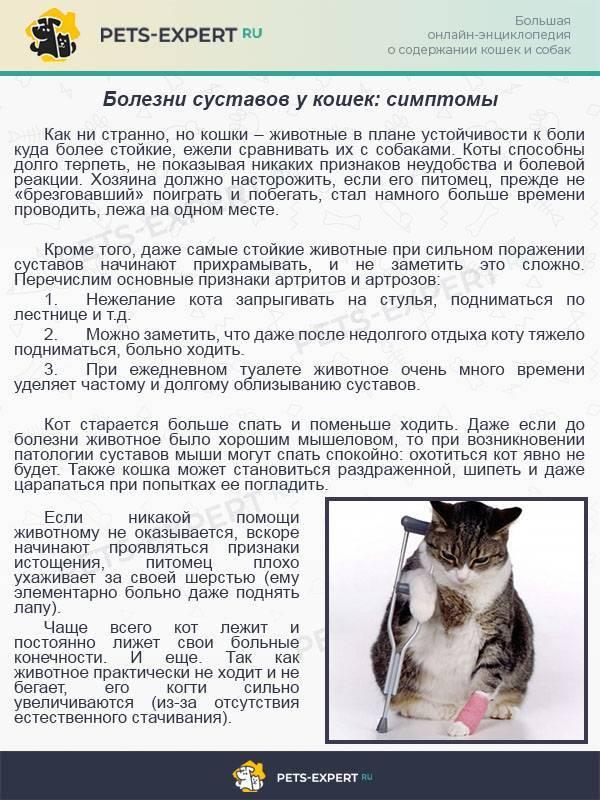 Кожные заболевания кошек [список + как лечить каждое]