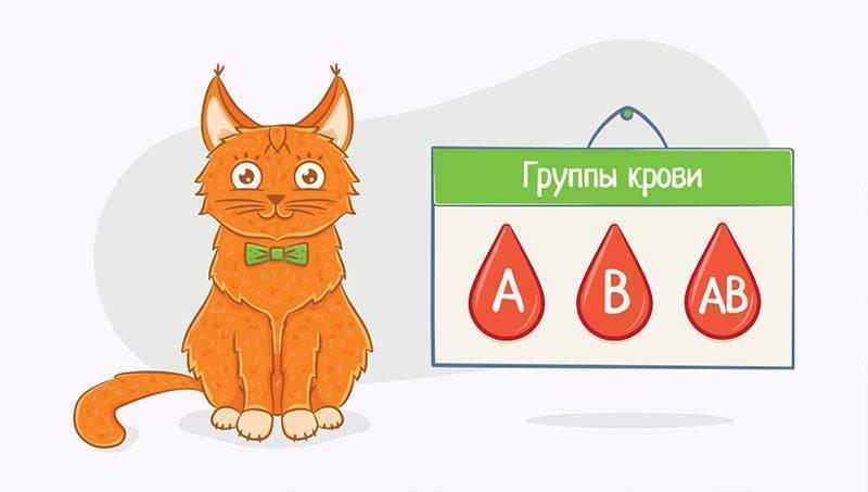 Можно ли вылечить анемию у кота, как восполнить кровопотерю у кошки?