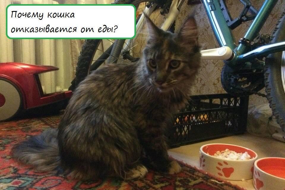 Кошка стала много есть - стоит ли переживать? | мир кошек почему увеличение аппетита у кошки должно насторожить хозяина? | мир кошек
