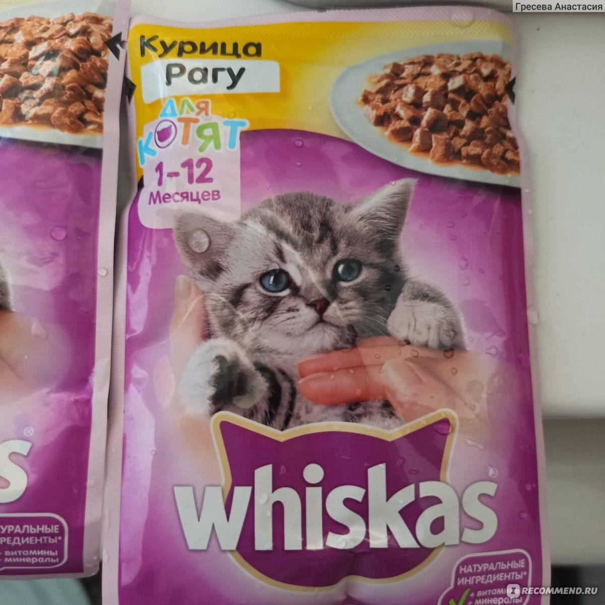 Сухой и влажный корм «вискас» для взрослых кошек и котят: можно ли давать продукт любимцу, не вреден ли он?