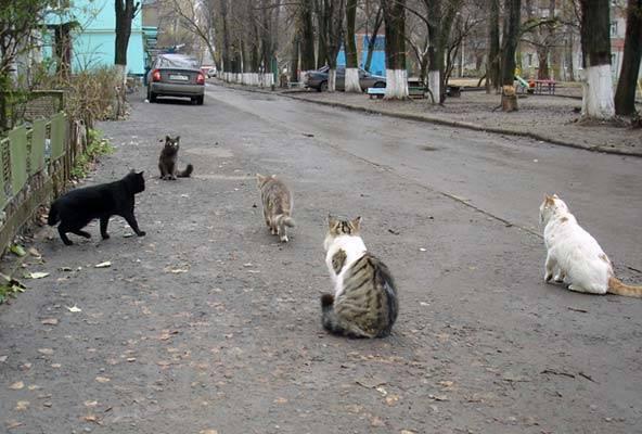 Сколько дней гуляет кошка: примеры в первый раз и как долго по времени