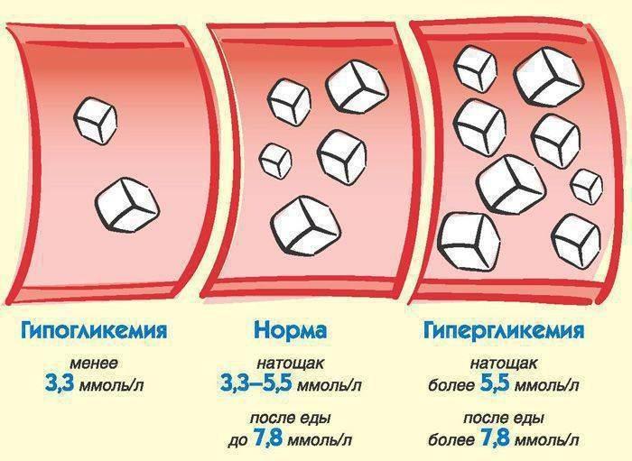 Повышена глюкоза в крови у кота: причины повышения уровня сахара, методы лечения