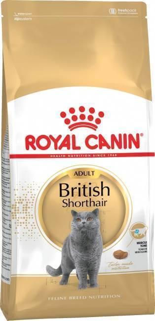 Вес кошки по возрасту: таблица, британская, шотландская и мейн-кун