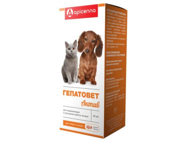 Гепатовет для кошек: инструкция по применению гепатопротектора, состав и аналоги
