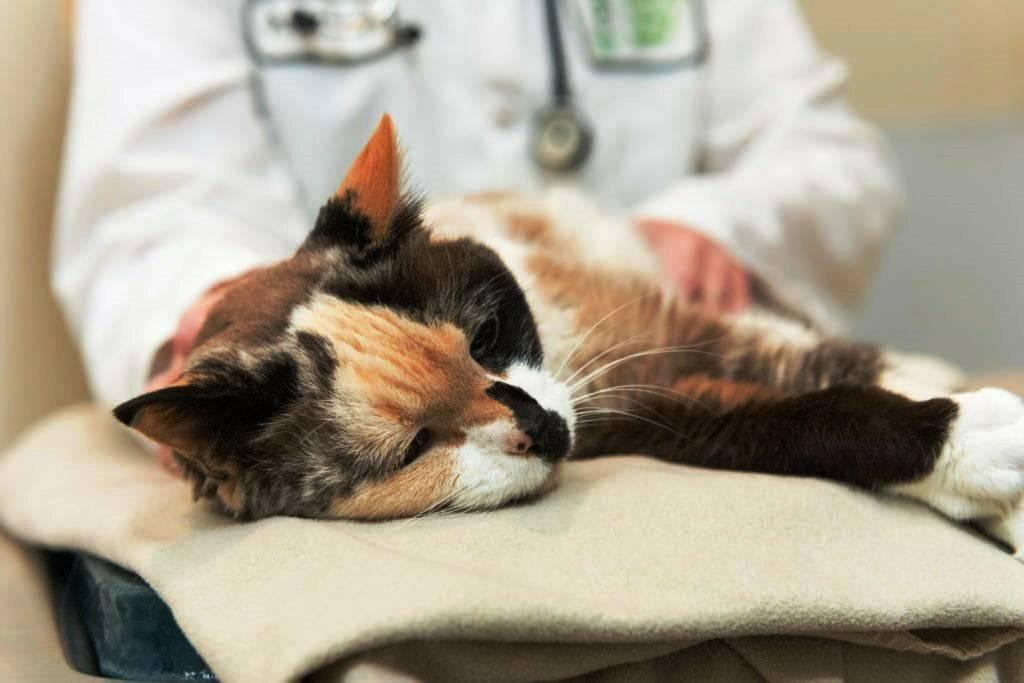 Какие меры стоит предпринять, если у кошки простуда