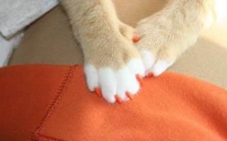 Как подстричь когти кошке или котенку в домашних условиях когтерезкой