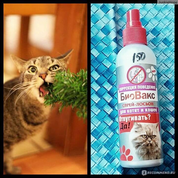 Какой запах отпугивает кошек, чтобы не гадили | не любят, средство, отпугивает