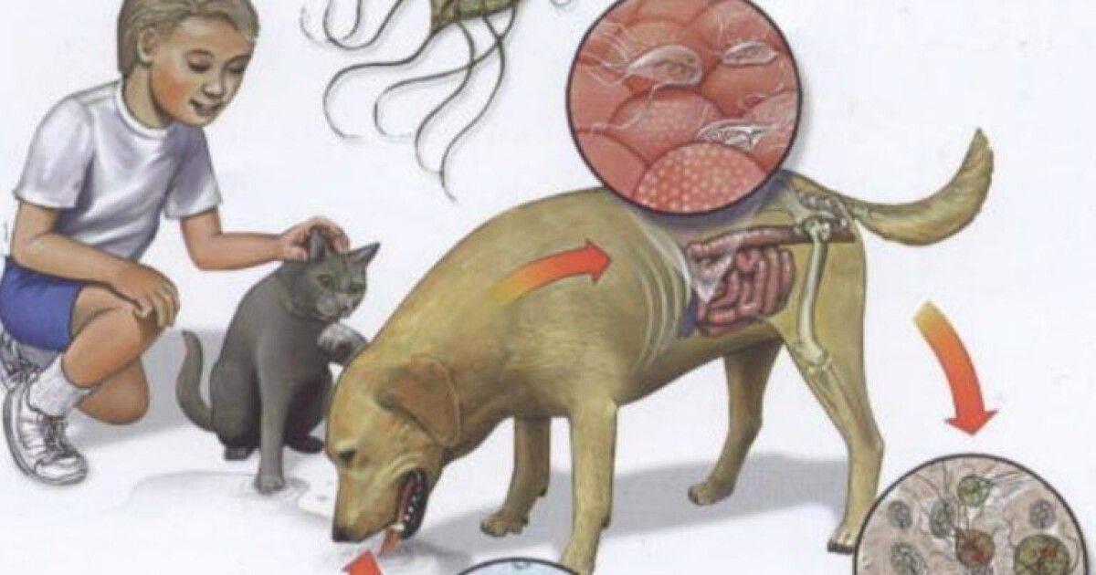 Болезни кишечника у кошек: симптомы и лечение кишечных воспалений, инфекционных заболеваний и травм