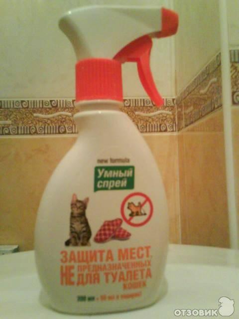 Приучение кошки к лотку: как использовать спрей, чтобы приучить к туалету котенка или взрослого кота?