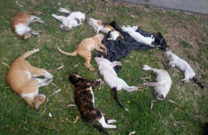 Сонник кот который нападает. к чему снится кот который нападает видеть во сне - сонник дома солнца