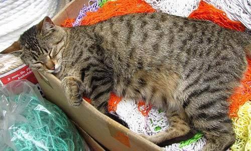 Беременность кошки