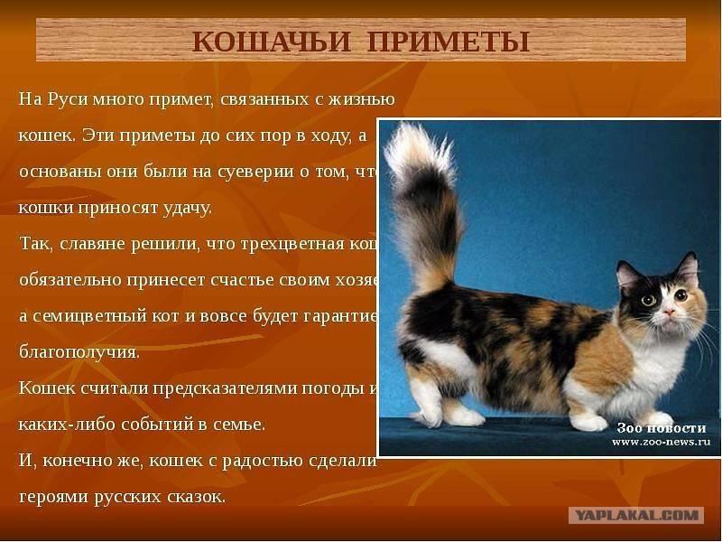 Народные приметы о рыжих кошках и котах - значение, варианты толкований