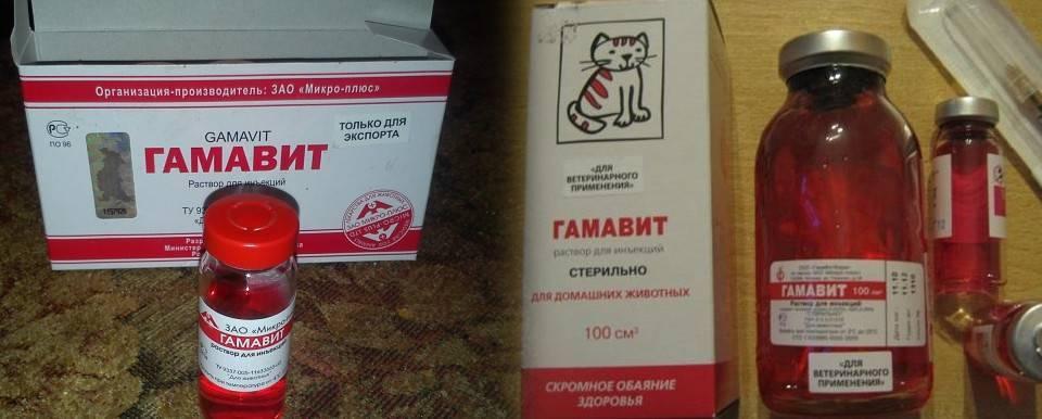 Кошачья витаминная добавка гамавит: примеры куда колоть, дозировка, свойства