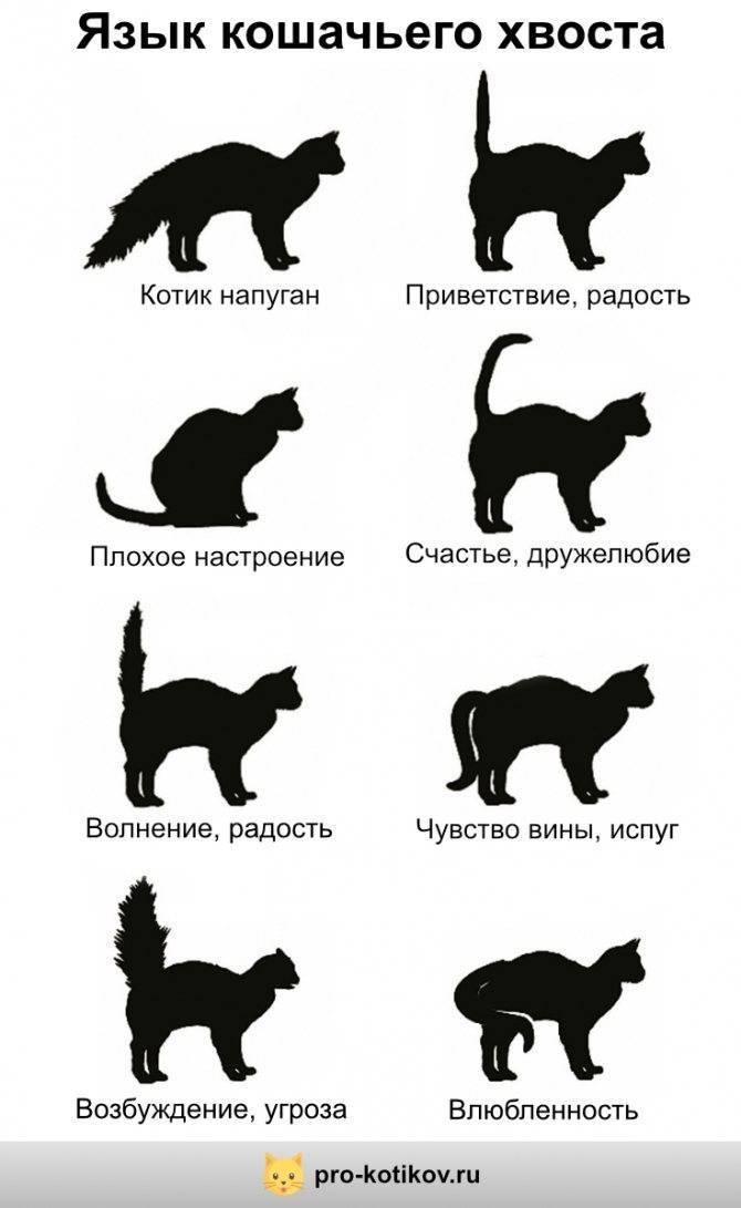 Как понять своего любимца. переводчик кошачьего языка