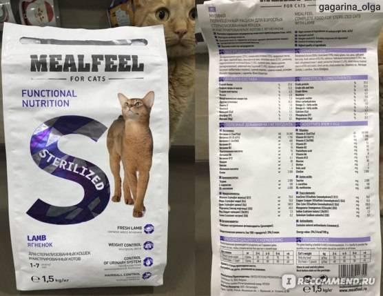 Разбираемся как и чем кормить стерилизованную кошку