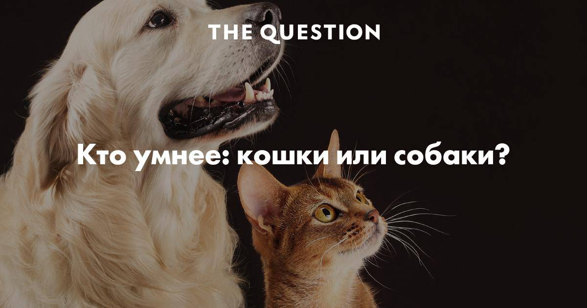 7 самых умных животных в мире - лайфхакер