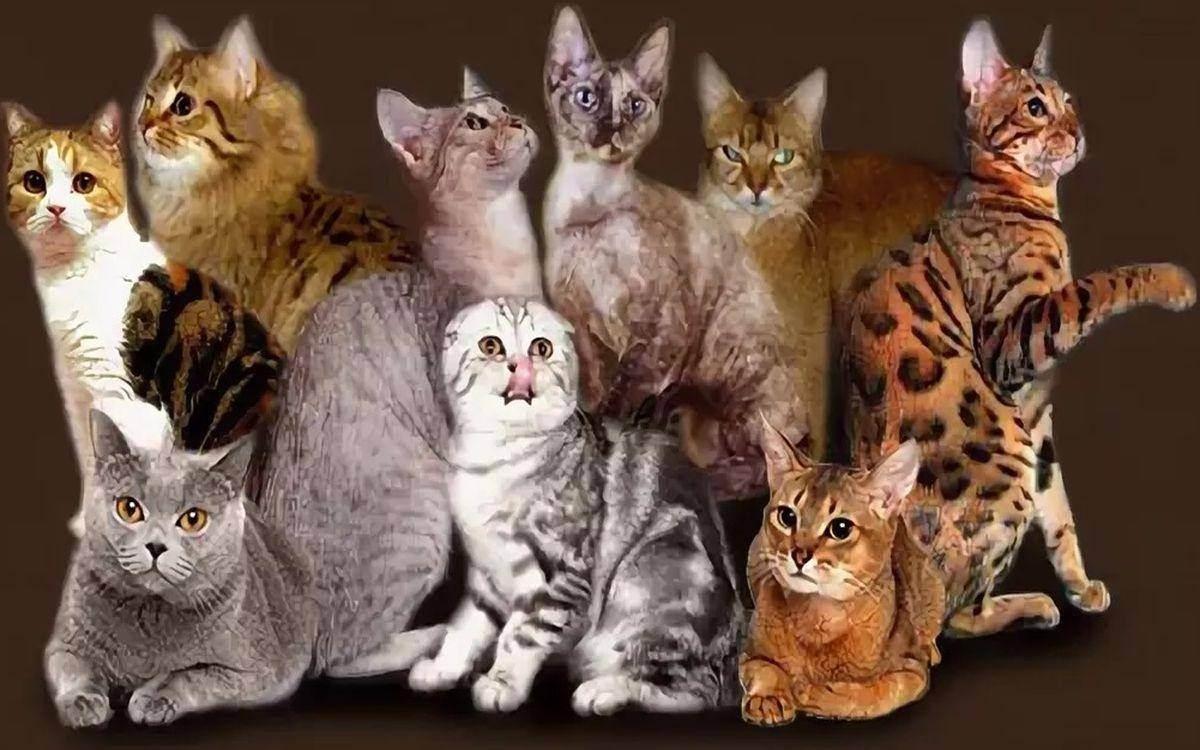 Правовые вопросы содержания домашних кошек