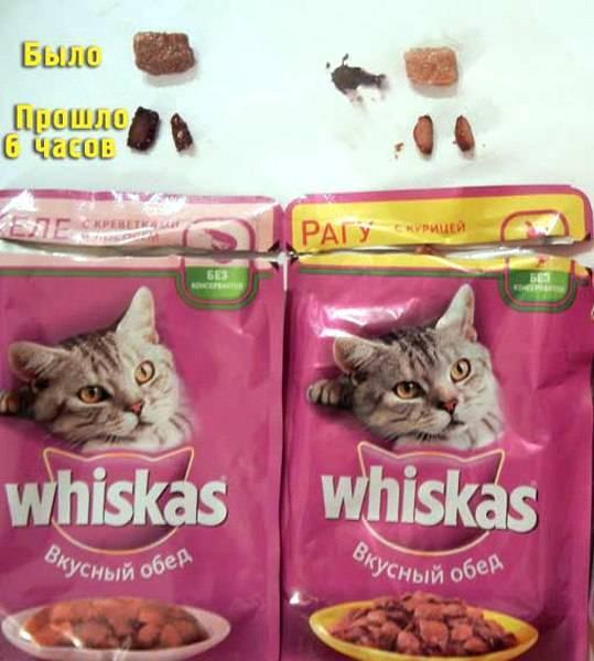 Вискас корм для кошек: состав, сухой и влажный, паштет, подушечки, для кастрированных котов, котят