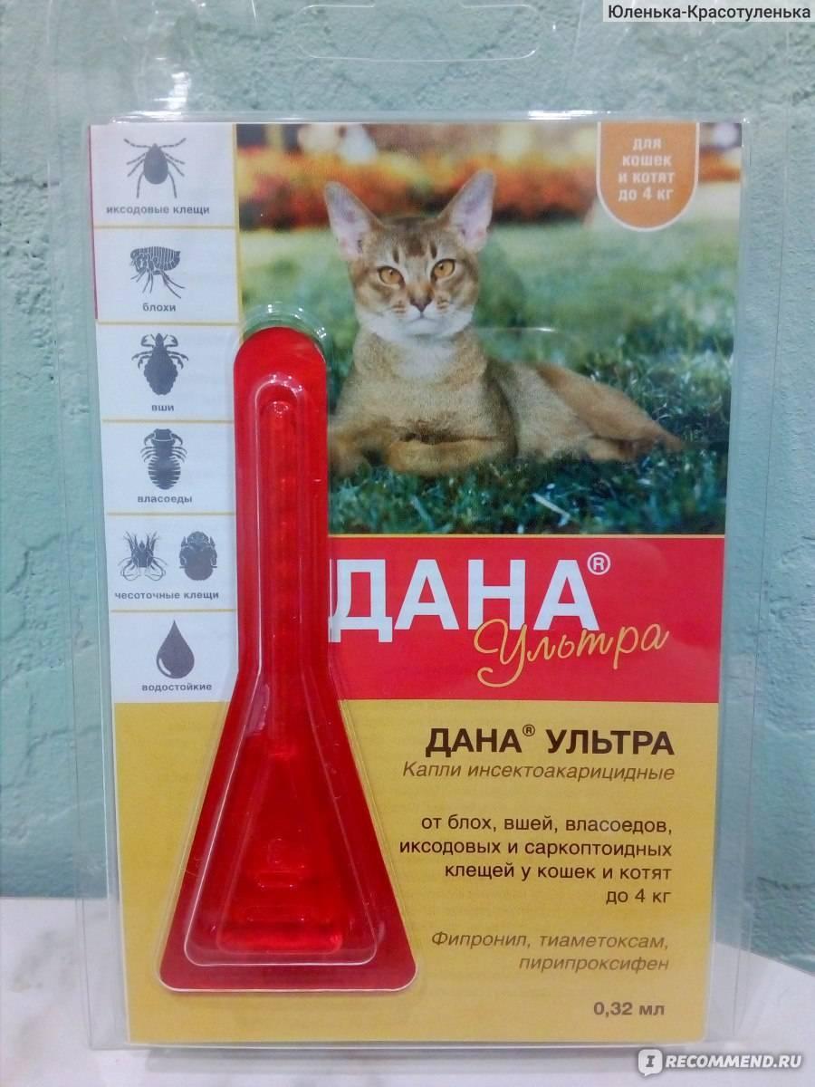 Как вывеси блох у кошек с помощью народного средства?