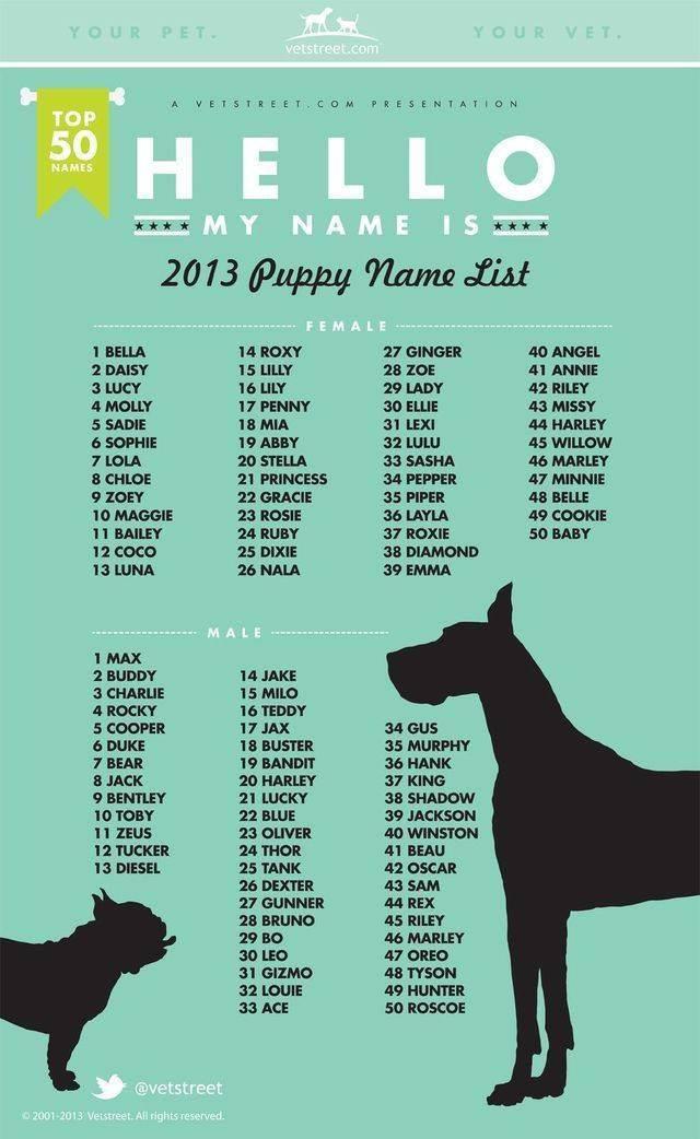 Имена для котов британцев на английском языке male cat names boy kitten names