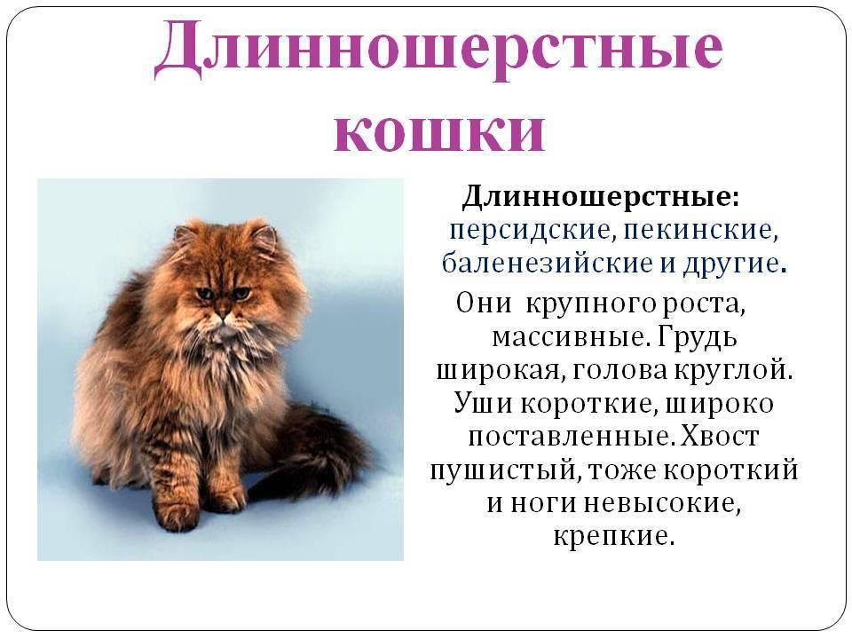 Породы кошек: фото и названия (длинношерстные, короткошерстные, лысые)
