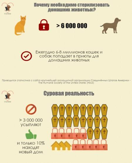 Последствия и влияние стерилизации на кошек | плюсы и минусы