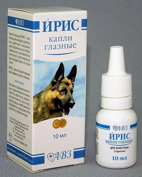 От чего помогают глазные капли ирис для собак и как их правильно использовать? это нужно знать!