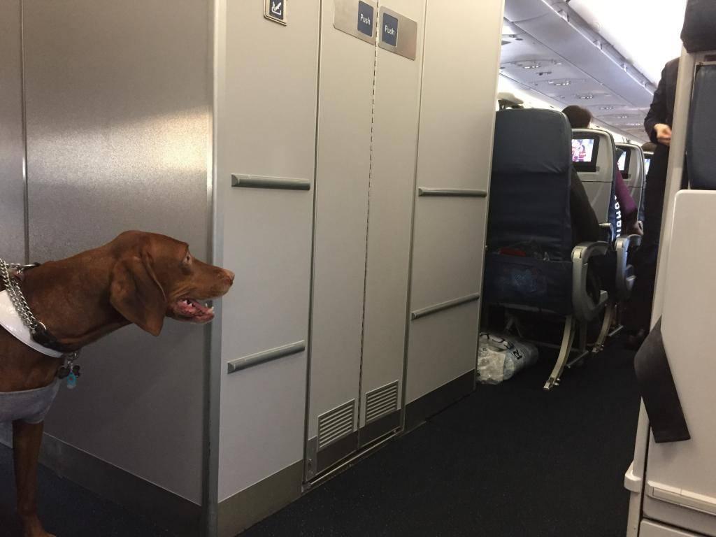 Как перевезти кота в самолете: билет и документы